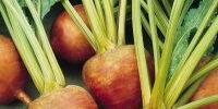 Golden beet