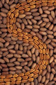 File:Pecan nuts.jpg