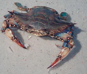 BlueCrab