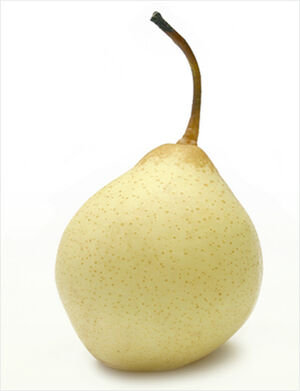 Tientsin pear
