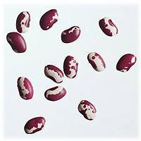 File:Anasazi beans.jpg