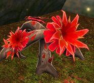 Bloodroot Plant
