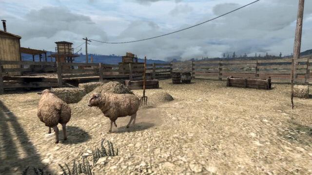 File:Rdr sheep.jpg