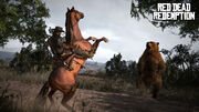 Rdr bear horse