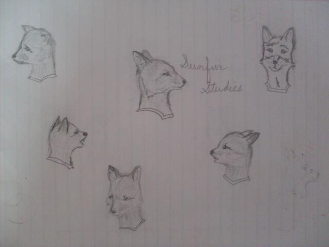 File:Sunfur studies.JPG