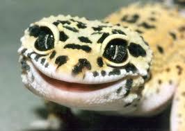 File:Leopard Gecko 2.jpg
