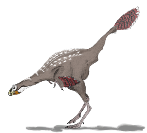 File:Caudipteryx2mmartyniuk.png