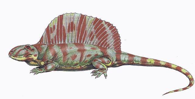 File:Dimetrodon natalis.jpg