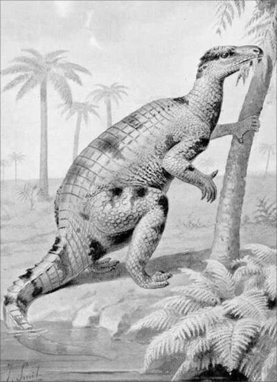 435px-Iguanodon feeding