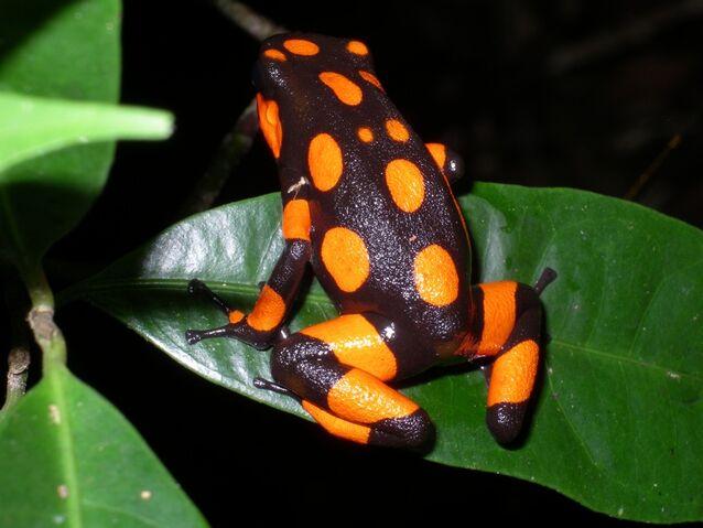 File:Halloween Frog.jpg