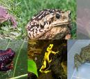 True toads