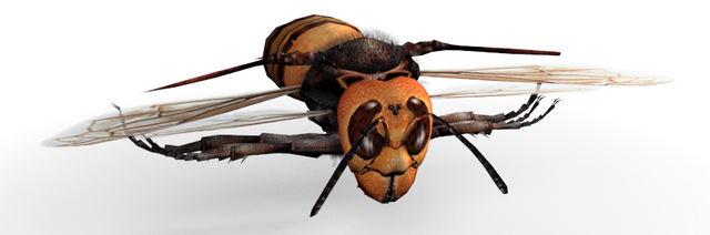 Fichier:Wasp.png