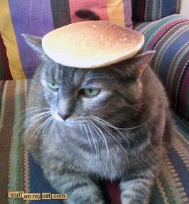 Pancake-cat-738537