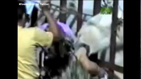Animal Attacks Caught On Video