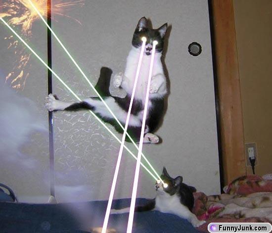 File:Laser kitties.jpg