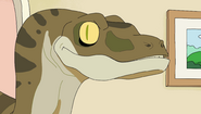 Photography Raptor