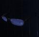 Shurik's Glasses