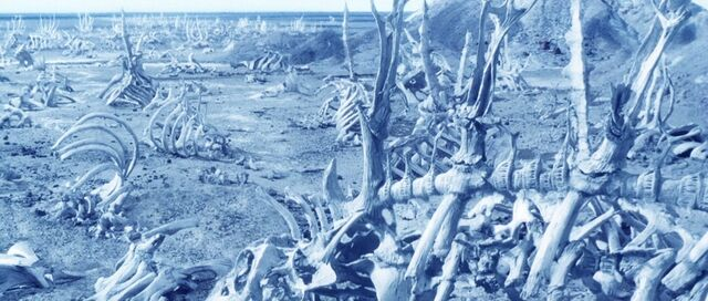 File:Whale bones.jpg