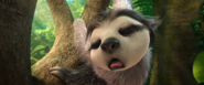 Sleeping rapping sloth