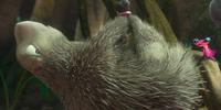 Plucked Porcupine