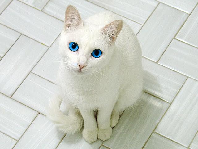 File:A cute kitty.jpg