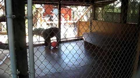 Monkey throws poop at screaming girl!!!!-0