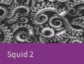 PatternCaseSquid2