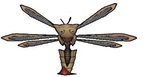 002 Dragonfly