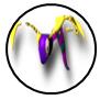 Rank s 02 springtail master