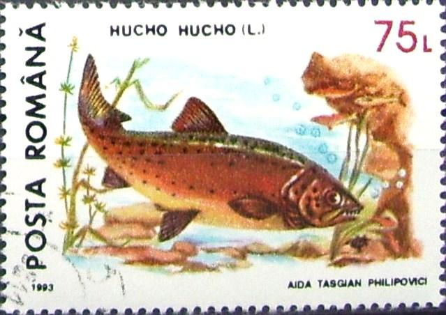 Fișier:Timbru Hucho Hucho.jpg