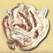 Dragon Footprint