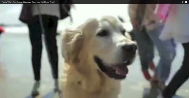 File:Winston dog.png