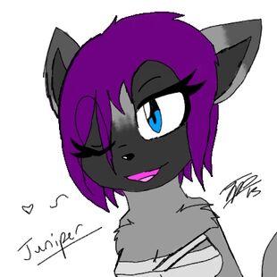 Juniper The Wolf