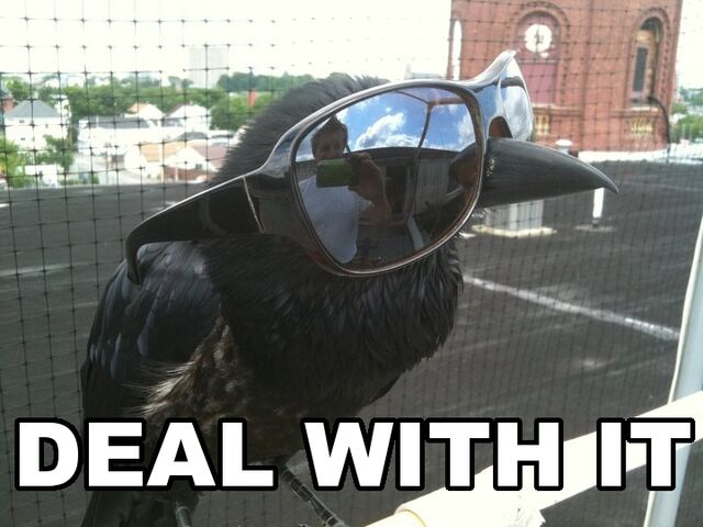 File:Deal-with-it-crow.jpg