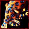 Npc - Blue Ring Octopus