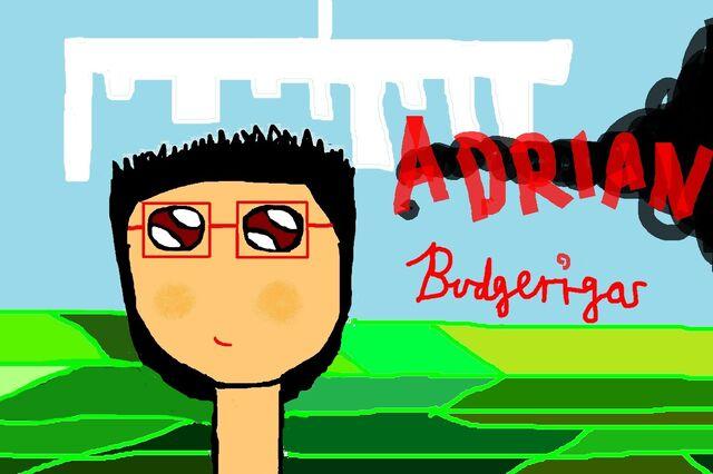 File:New Adrian Budgerigar.jpg