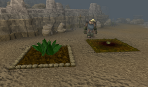 Trollheim herb patch
