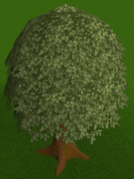 Oak tree built