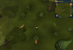 Scan clue Piscatoris Hunter area east of fairy ring
