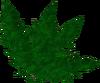 Clean dwarf weed detail