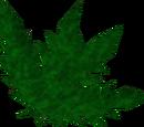 Clean dwarf weed