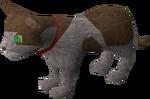 Pet kitten (white and brown) pet