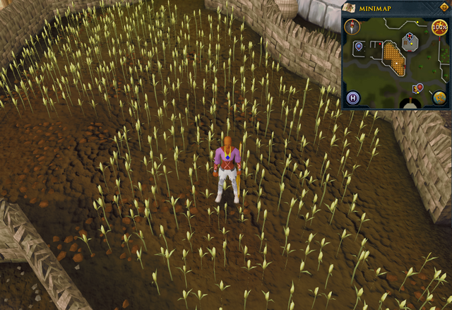 File:Emote clue Think Lumbridge wheat field.png