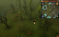 Scan clue Haunted Woods south-west of fairy ring.png