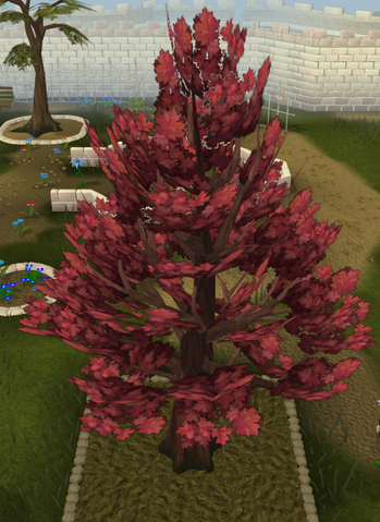 File:Maple8.png