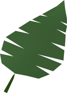 File:Palm leaf detail.png