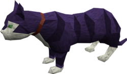 Overgrown cat (purple) pet