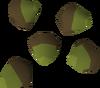 Acorn detail