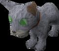 Bones (the kitten).png