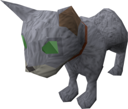 Bones (the kitten)